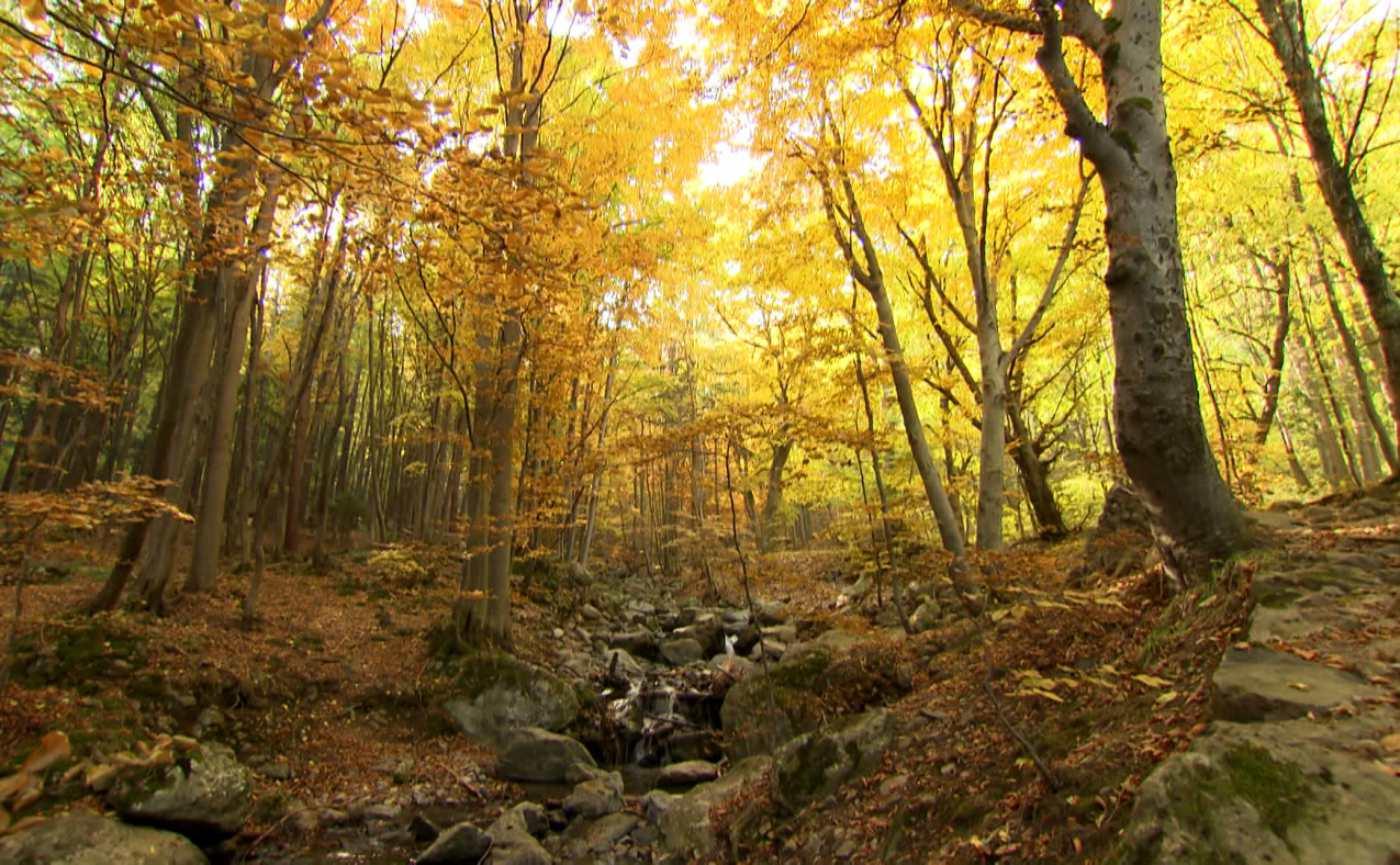 "Златна есен в ""Бащино огнище"""