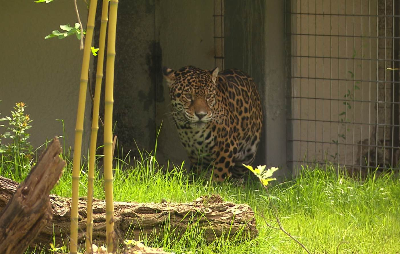 130 години Софийски зоопарк
